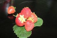 Foto Erdbeeren mit Grün